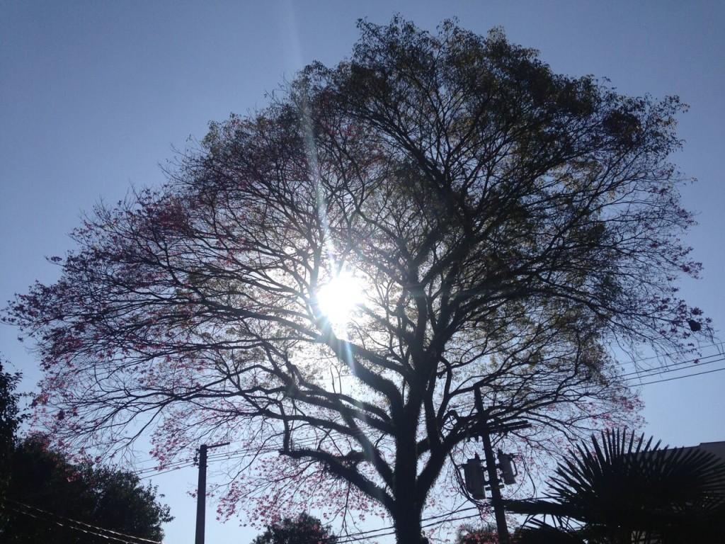 É ganho de árvore ou fio de eletricidade? (foto: Leandro Beguoci)