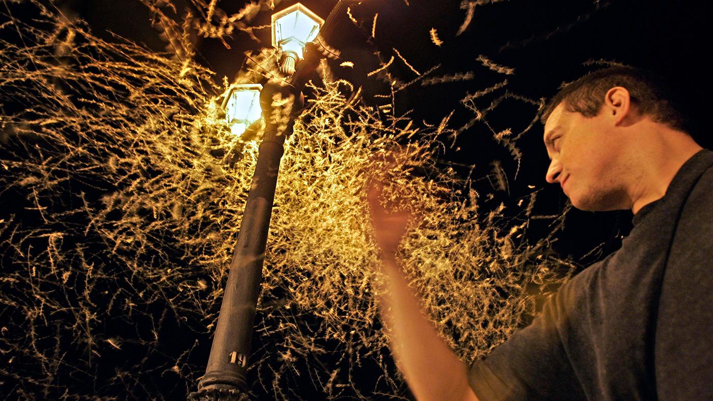 Mariposas voam em torno de poste deiluminação em Tudela, Espanha (AP Photo/Alvaro Barrientos)